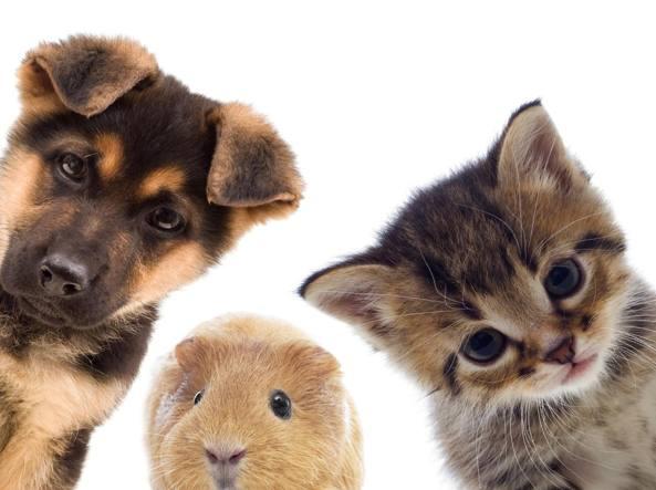 Funerale animali, quali le procedure ed i costi