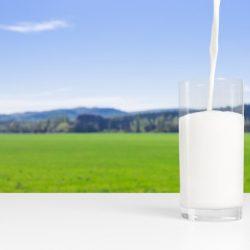 Consigli utili per il conteggio delle cellule somatiche nel latte